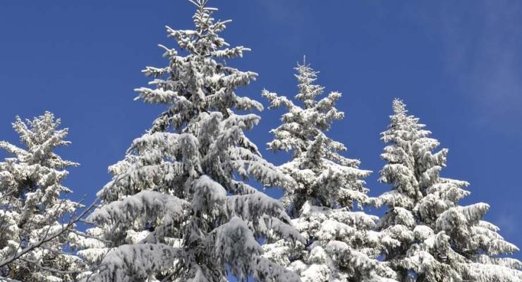 Zimowisko w Jakuszycach
