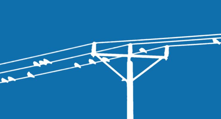 Ptaszki na drutach energetycznych