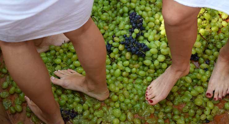 Deptanie winogron