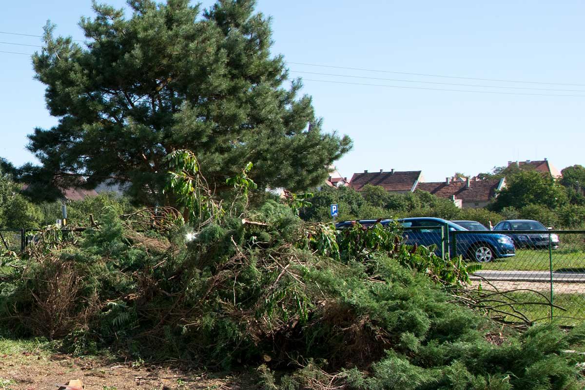 Wycięte drzewa przed szkołą w Wińsku
